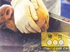 安大略省爆发猪流行性腹泻(PED)