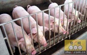 广东2015年生猪出栏3663.44万头,年末存栏2135万头