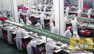 中国买家收购新西兰肉类加工厂 投6百万新西兰元升级改造