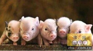 断奶仔猪应激综合征的发病原因及防治方法