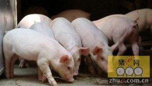 螯合微量元素可以增强仔猪的免疫力,促进其生长