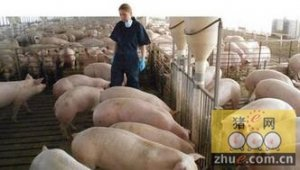 改变经营策略提高猪场生产效率
