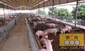 解读600头母猪场核心数据的几种算法