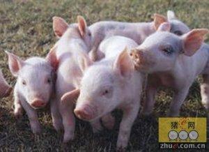 议猪细菌性消化系统疾病
