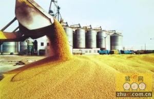 俄罗斯政府可能禁止进口美国玉米和大豆