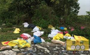 广东佛山:寒潮冻死猪数十头 乱扔路边被人捡去