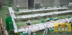 黑龙江:嘉一香公司为甘南生猪产业化奠定基础