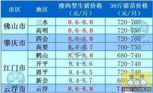 广州2016年01月31日猪讯