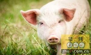 陕西物价局:2月份生猪猪肉价格预计呈下降走势