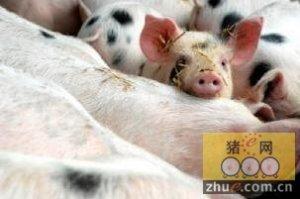世界动物保护协会:全球报告显示中国企业正逐渐提高对动物福利的关注