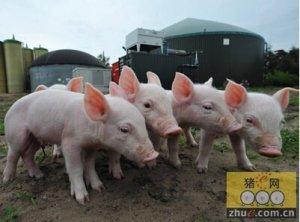 2015年云南省生猪出栏3451.0万头 下降1.3%