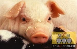 江西每天运送1200头生猪 保障春节香港市场供应