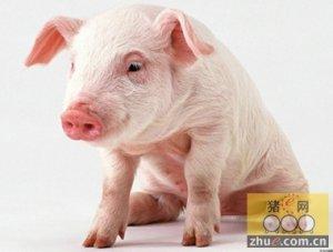 猪呼吸道疾病综合症的综合保健防控
