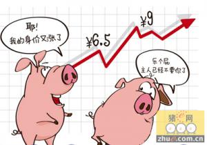 生猪行情走势短评:春节猪价有望破10
