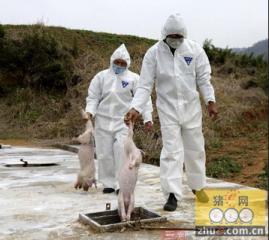 宁夏将建立病死畜禽无害化处理机制