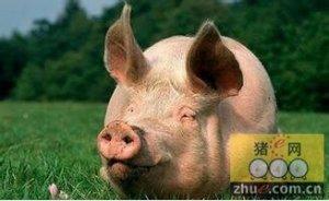 猪市告别最坏的时代迎来最好的时代 最佳