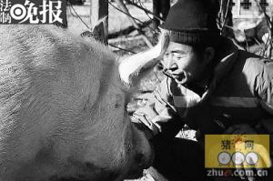 """有图有真相!生猪养殖场主人骑着""""八戒""""过猴年"""