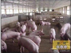 猪舍氨气的危害及防治
