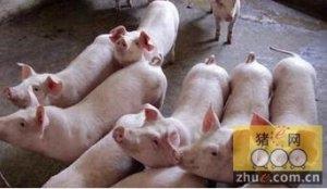 猪便秘用花生油或食用盐效果好