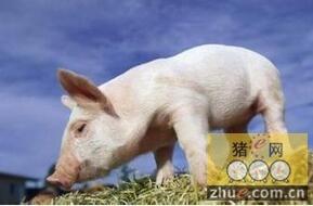 苏格兰生猪价格8年最低值