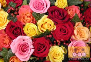 如果是你,怎么卖掉情人节后剩下的玫瑰?