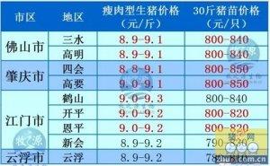 牧之源--广东2月18日猪讯
