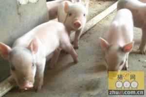 未来12年将有大批生猪散养户破产出局!