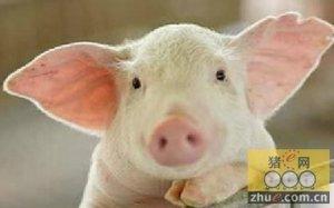 生意社:春节后生猪商品指数继续坚挺运行