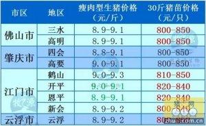 牧之源--广东2月19日猪讯