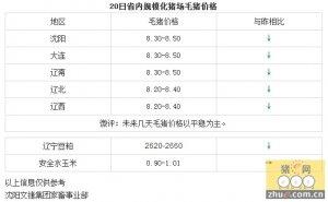【文捷集团】2月20日辽宁省内猪评:未来几天毛猪价格以平稳为主