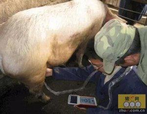 现代化猪场猪群生产必备的检测项目:兽用B超在猪场测孕案例讲解