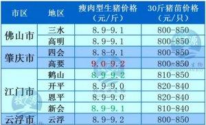 牧之源--广东2016年02月21日猪讯