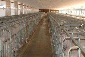 生猪养殖维持高景气 上下游企业跑步进场