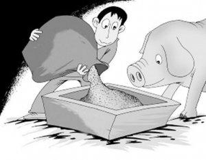 """养猪故事:农家汉子的""""养猪经"""""""