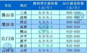 牧之源--广东2月23日猪讯