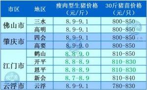 牧之源--广东2月24日猪讯