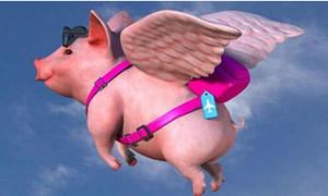 """泪流满面:""""养猪神话""""再现,一头猪最高赚千元!"""