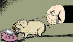 抗生素又摊上事了:抗生素致儿童肥胖?