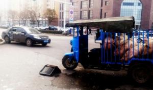 运猪车撞上私家车 7头生猪到处逃窜