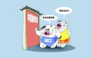 中国生猪企业不惜巨资大举进口外来种猪