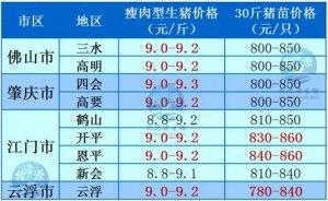 牧之源--广东2月29日猪讯