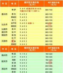 广州日锋- 2016年2月29日行情信息