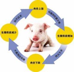 互联网催生出养猪业新的生态圈