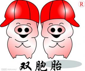 三胞胎直销猪场赢得竞争主动权