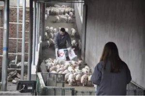 中小规模猪场最头疼的人员稳定问题,需要老板何去何从?
