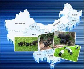 警惕:后期环保政策或愈趋严格,生猪禁养