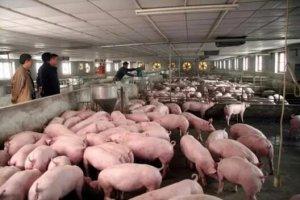 是否具备高效的人员管理能力是猪场快速发展的前提