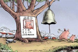 湖南娄星区全面启动禁养区生猪退养工作