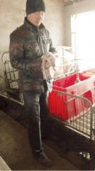 """""""养猪倌""""的生态养殖路:带动身边农户一起致富"""