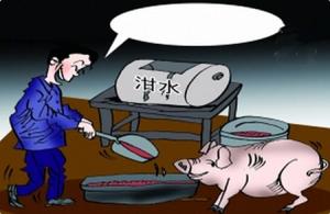 泔水养猪危害大 千金难买健康身